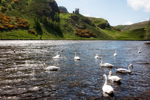 St Margaret's Loch in Holyrood Park