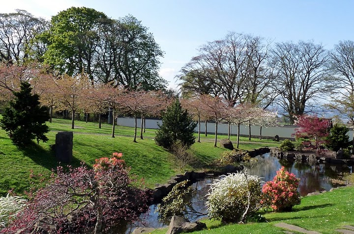 The Japanese garden with trees starting to blossom