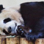 Yang Guang was sleepy...