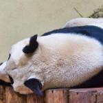 Yang Guang goes back to sleep!