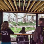 A zoo member explains about the outdoor enclosure