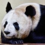 Yang Guang wakes up