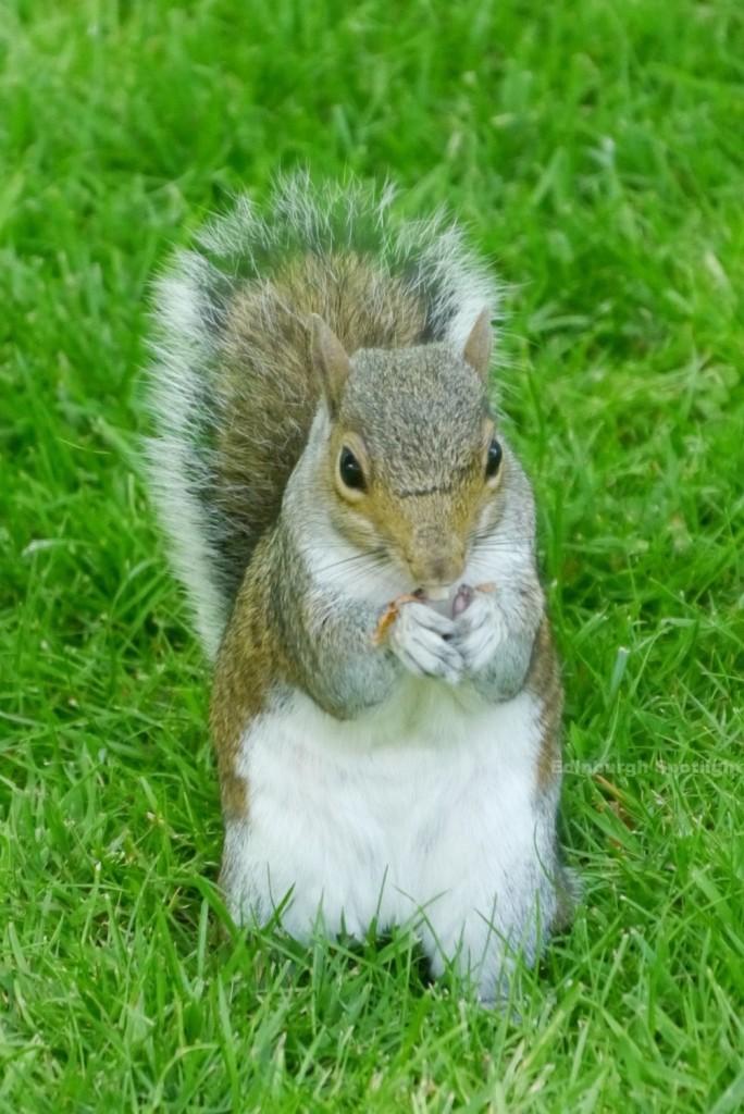 Botanics squirrel