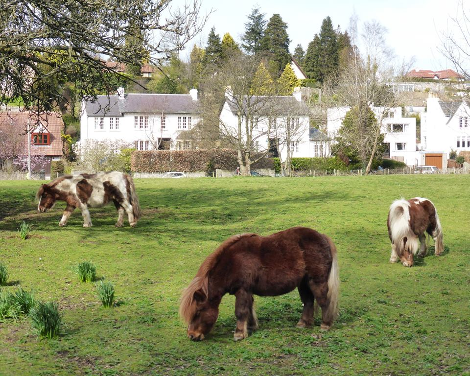 Braehead Park