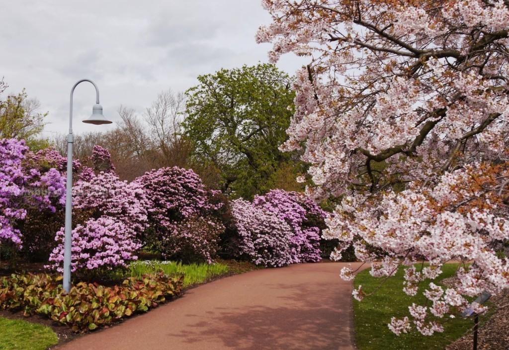 Spring in the Botanics