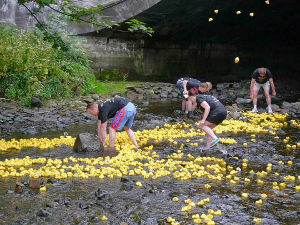 Volunteers help guide the ducks down the Water of Leith