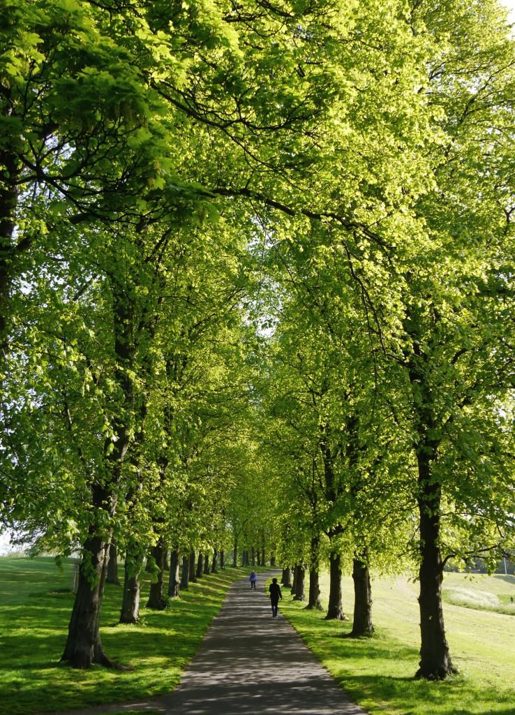 Morning sunshine on Inverleith Park