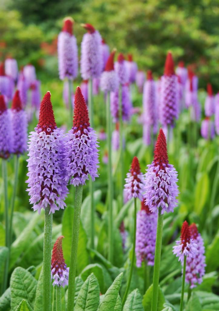 Flowers in the Botanics
