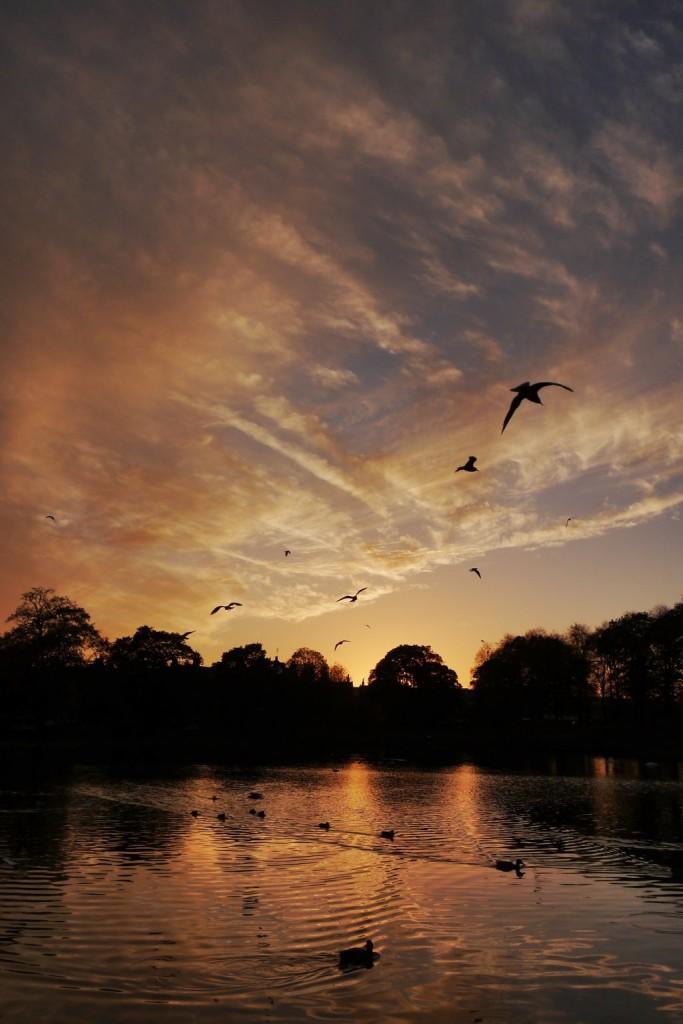 Sunset at Inverleith Park