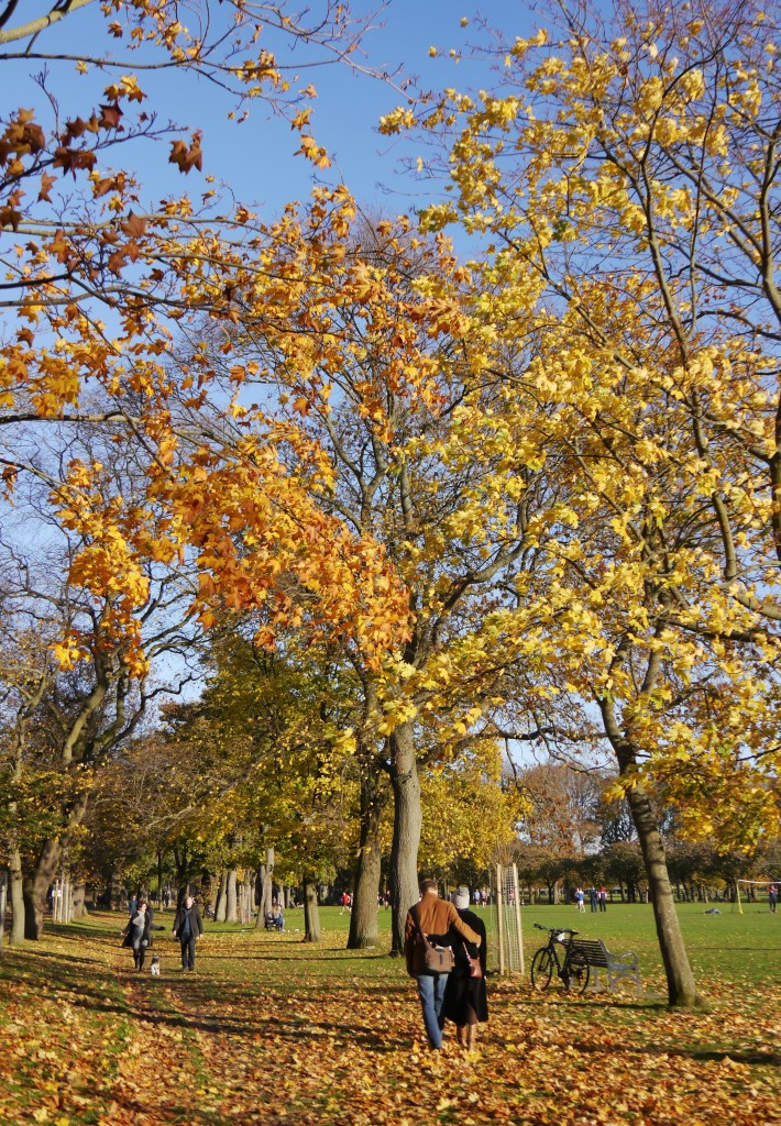 Autumn in the Meadows