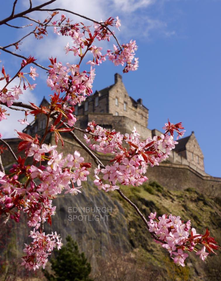 Blossom in front of Edinburgh Castle.