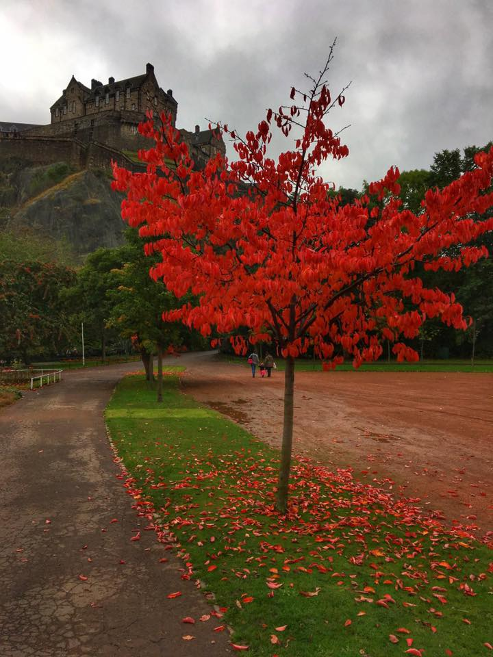 A splash of red in front of Edinburgh Castle.