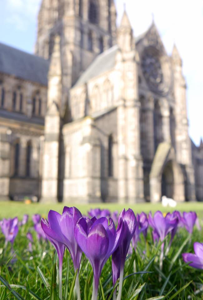 Crocuses in front of St Mary's Cathedral