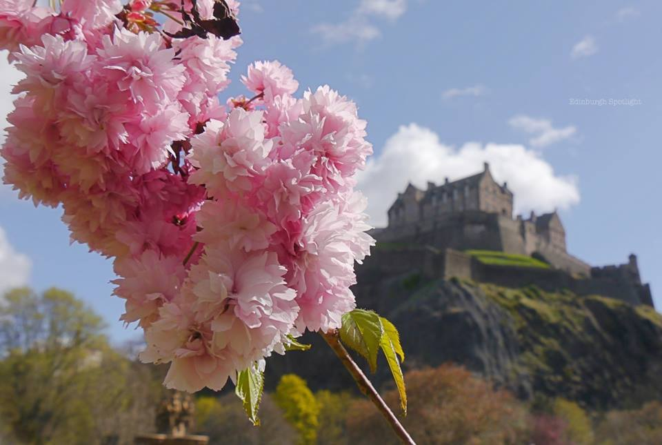 Blossom in front of Edinburgh Castle