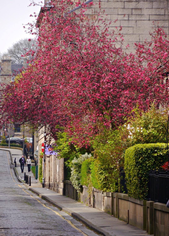 Dean Street blossom