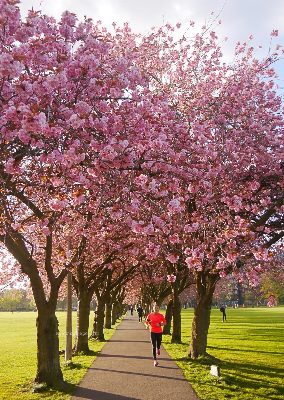 Meadows blossom