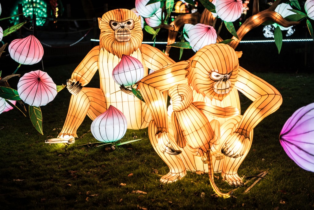 Edinburgh Zoo Chinese Lanterns